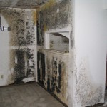 2019-07-29 - toxic-black-mold