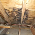 2019-07-29 - water-mold-damage-roof-leak